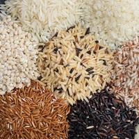 Organic Rice, Other Rice